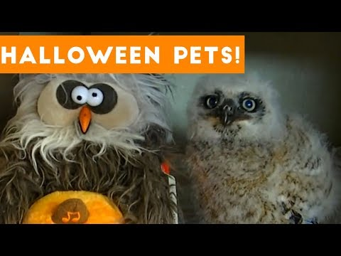 Funniest Cats & Dogs Wearing Halloween Costumes Blooper Compilation 2017 | Funny Pet Videos