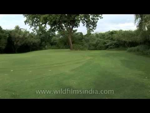 The Delhi Golf Club, one of India's premier golf clubs