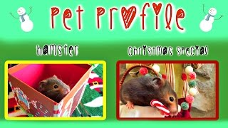 HAMSTER PET PROFILE | Christmas Special! Thumbnail