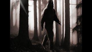Bigfoot | Sasquatch | Real Encounter Witness | Caught on Tape