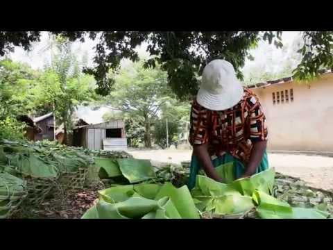 Madagascar Lychee Export