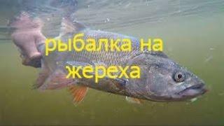 рыбалка на жереха.
