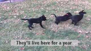 WARNING: This video contains cute puppies