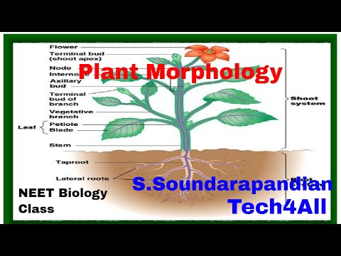 Tamil Biology Class:Plant Morphology www.tech4thepeople.in