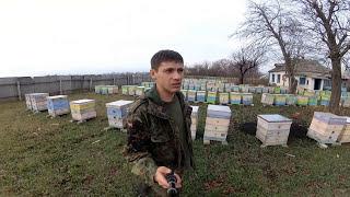 Первые шаги к промышленному пчеловодству