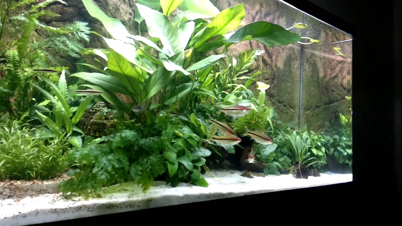 Non co2 semi planted aquarium 70 gallon youtube for Co2 fish tank