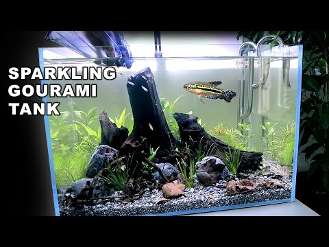 aquascape-tutorial:-sparkling-gourami-blackwater-aquarium-(how-to-step-by-step-planted-tank-guide)