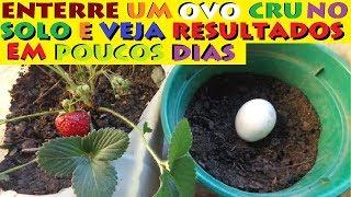 Enterre um ovo cru no solo e veja o que acontece em poucos dias!
