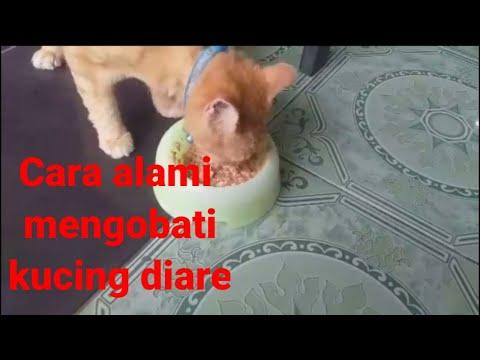 cara-alami-mengobati-kucing-diare