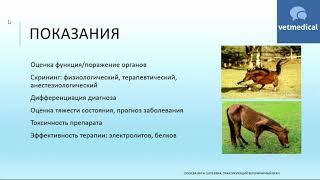 """Вебинар: """"Биохимический анализ крови лошадей в ветеринарной практике"""""""