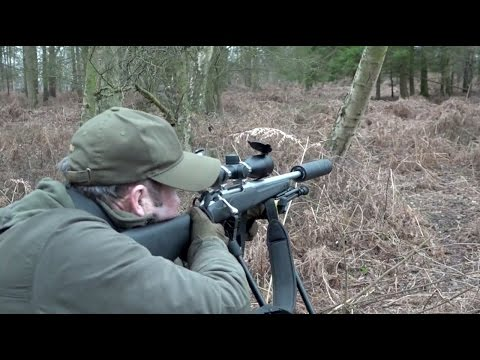 The Shooting Show – last-light fallow deer stalking in Bedfordshire