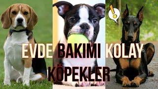 Evde Bakmak İçin İdeal 25 Köpek Cinsi