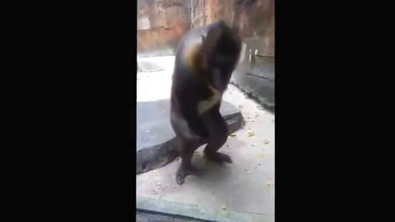 Yutube monkey masturbation