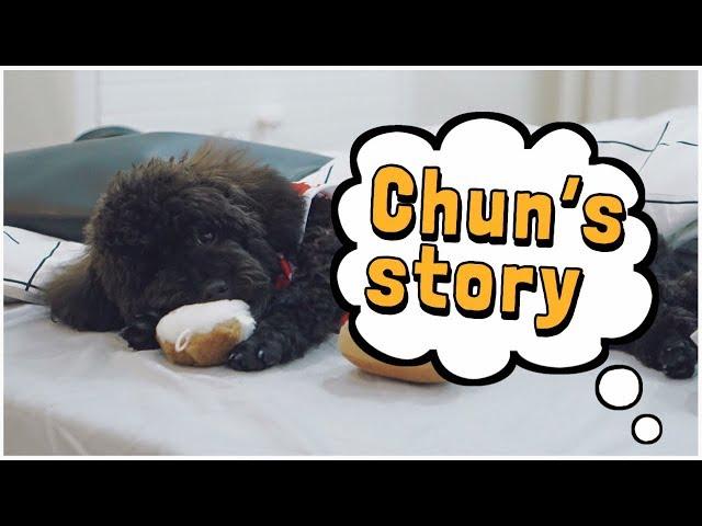 Nuôi chó khi nhà có em bé | Bố mẹ Cam nuôi Chun như thế nào | Gia Đình Cam Cam Vlog 35