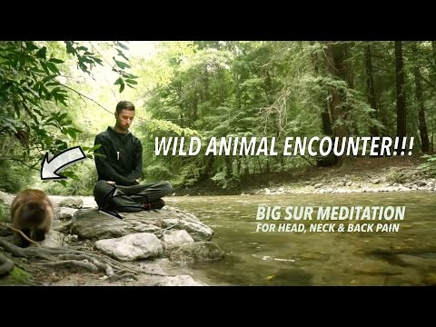 Wild Animal Encounter!!! Big Sur River Meditation for Head, Neck and Back Pain with Woody Woodrow