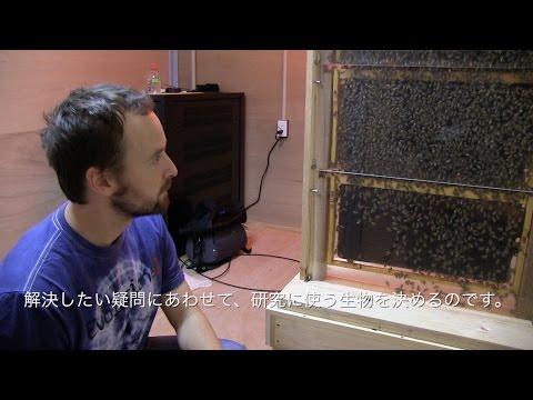 Ecology and Evolution Unit Introduction Video 生態・進化学ユニット紹介ビデオ