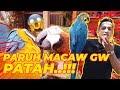 Paruh Macaw Gw Patah Azab Lelaki Genit  Mp3 - Mp4 Download