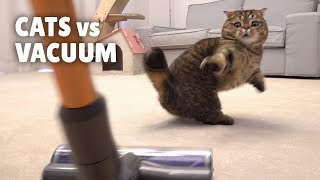 Cats vs Vacuum
