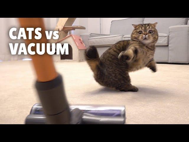 Cats vs Vacuum