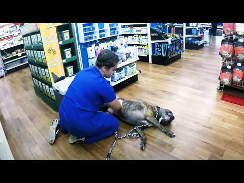 Funniest Reaction of Animals Go To The Vet 😂🐶🐱 [Funny Pets]
