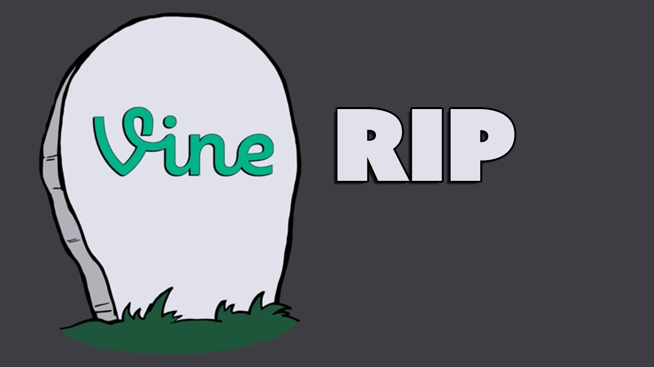 Image result for vine is dead