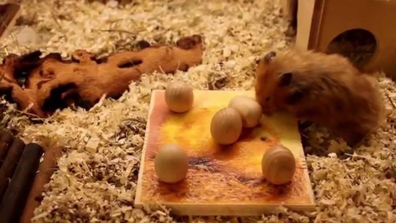 Feldsalat Für Hamster
