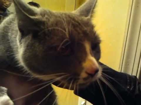 Cat Says NO to Bath :3