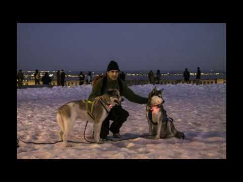 Urban Mushing Montreal - Spring Day and Night Run Compilation - Two Dogs and a Kickspark
