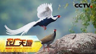 《农广天地》 20190730 深山农妇的网销梦| CCTV农业