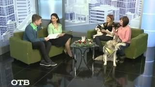 Как на Крайнем Севере: ездовые собаки на Среднем Урале (10.12.14)