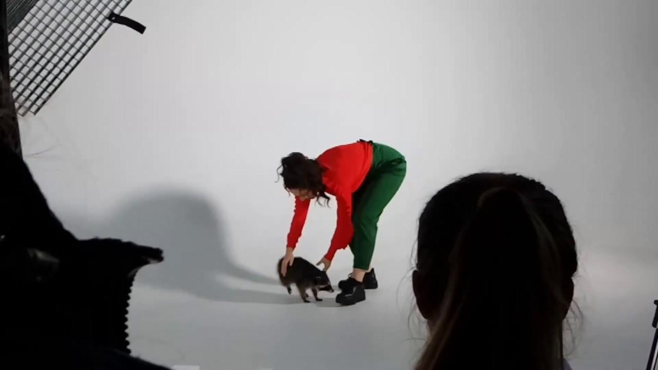Аренда животных 8965-380-13-11 Москва(11) - YouTube
