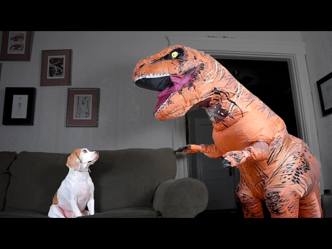 Generate T-Rex Befriends Dog: Funny Dog Maymo Snapshots