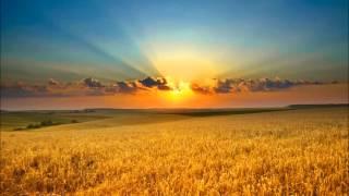 Dark Flower - Sunset In The Cornfield - (Melancholy Music)