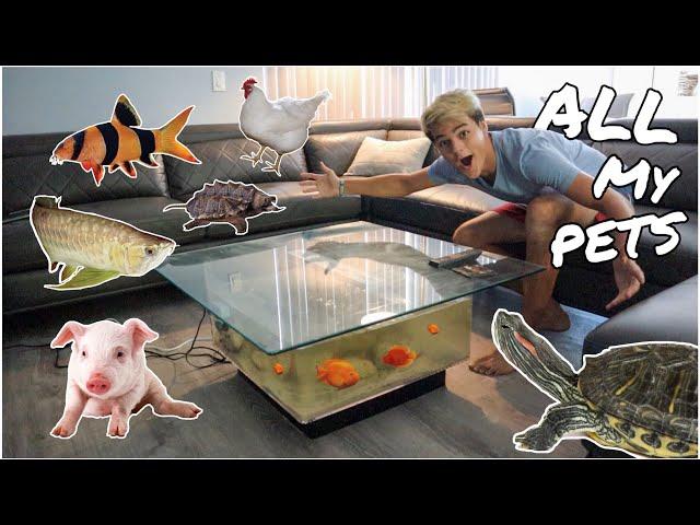 ALL My ANIMALS in One Video!!! *FEEDING*