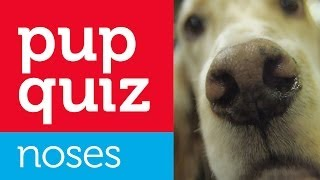 Pup Quiz! - These Noses Belong To Which Dog Breeds? Westminster Dog Show 2014: By Petco