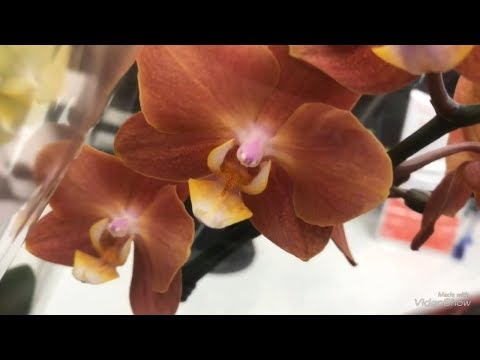 АШАН .Орхидеи. Цветы. Уценка!