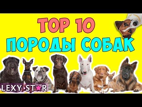 Сторожевые породы собак dogsecretsru