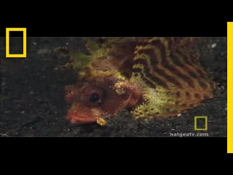 Caring for Coral | National Geographic