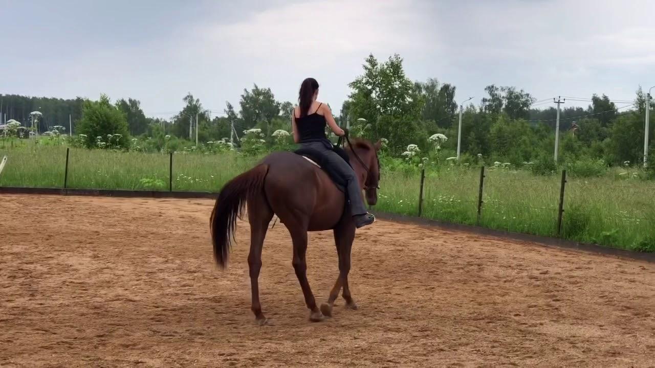 Учимся слушать лошадь