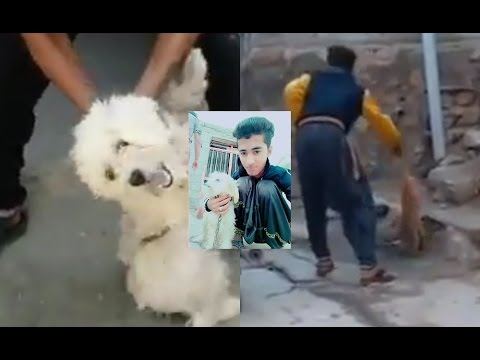 Animal Cruelty in Minab City, Hormozgan Province, Iran