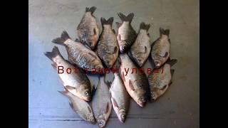Ловим Карася Рыбалка на Кубани июнь 2017