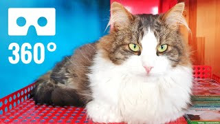 360° Vr Video Cute Andamp Funny Cats Video In Cat Cafe Virtual Reality 360 Degree