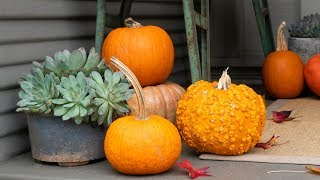 3 Ideas for Pumpkin Arrangements | Sunset