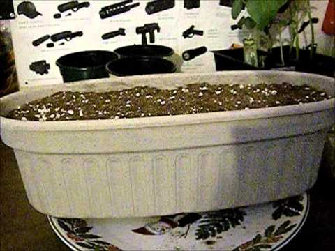 NK Lawn Garden Herb Kit Start Sowing seeds may 1st 2014