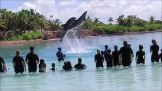 2016 Bahamas Atlantis Dolphin Cay