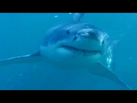Caught on Tape: Newlyweds' Terrifying Close Encounter With Shark