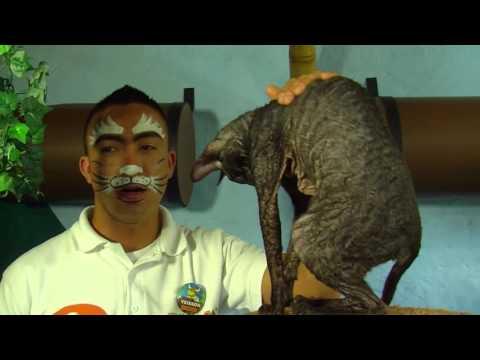 Cats - TvAgro por Juan Gonzalo Angel