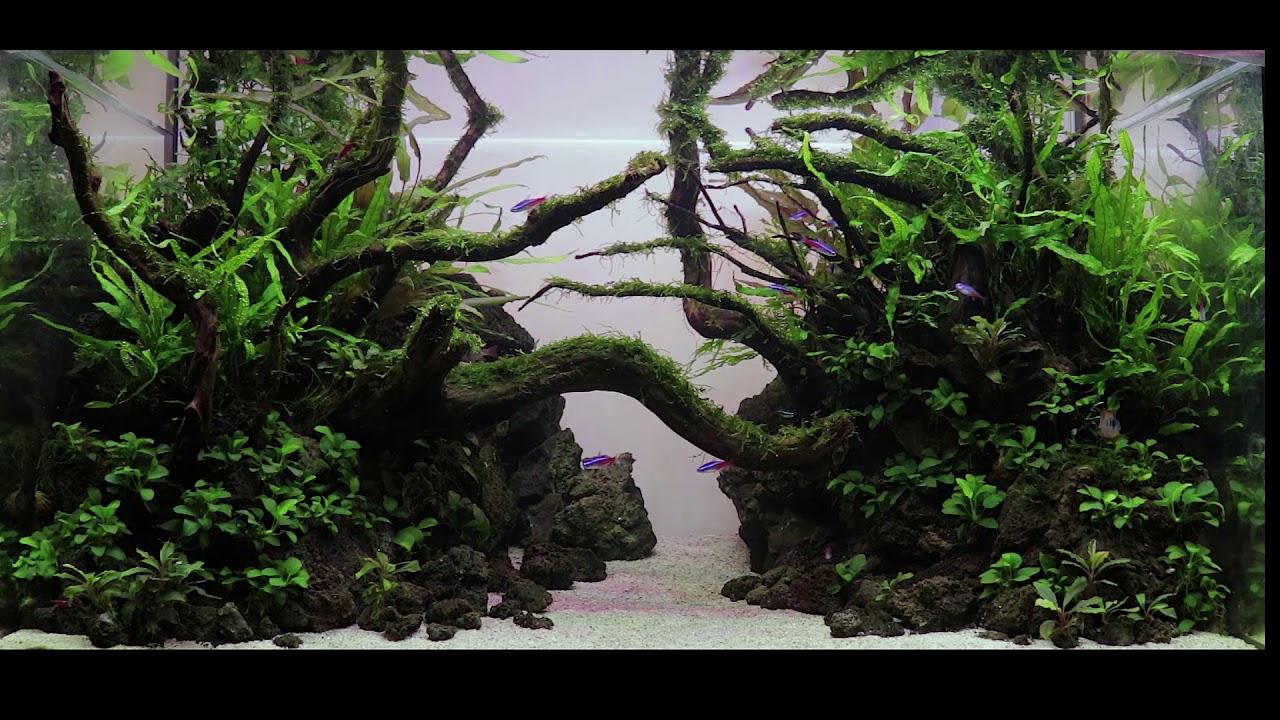 Nature Aquascape 900 Halfway - YouTube