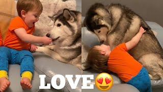 Babies & Huskies Nightly Routine is The Cutest Thing Ever! [TRY NOT TO SMILE]