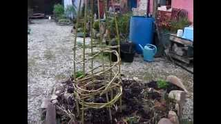 Making A Willow Wigwam For Beans